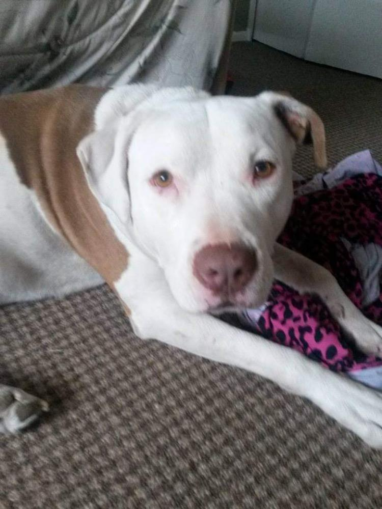 Lost Male Dog last seen 19th ave and Northern, Phoenix, AZ 85021