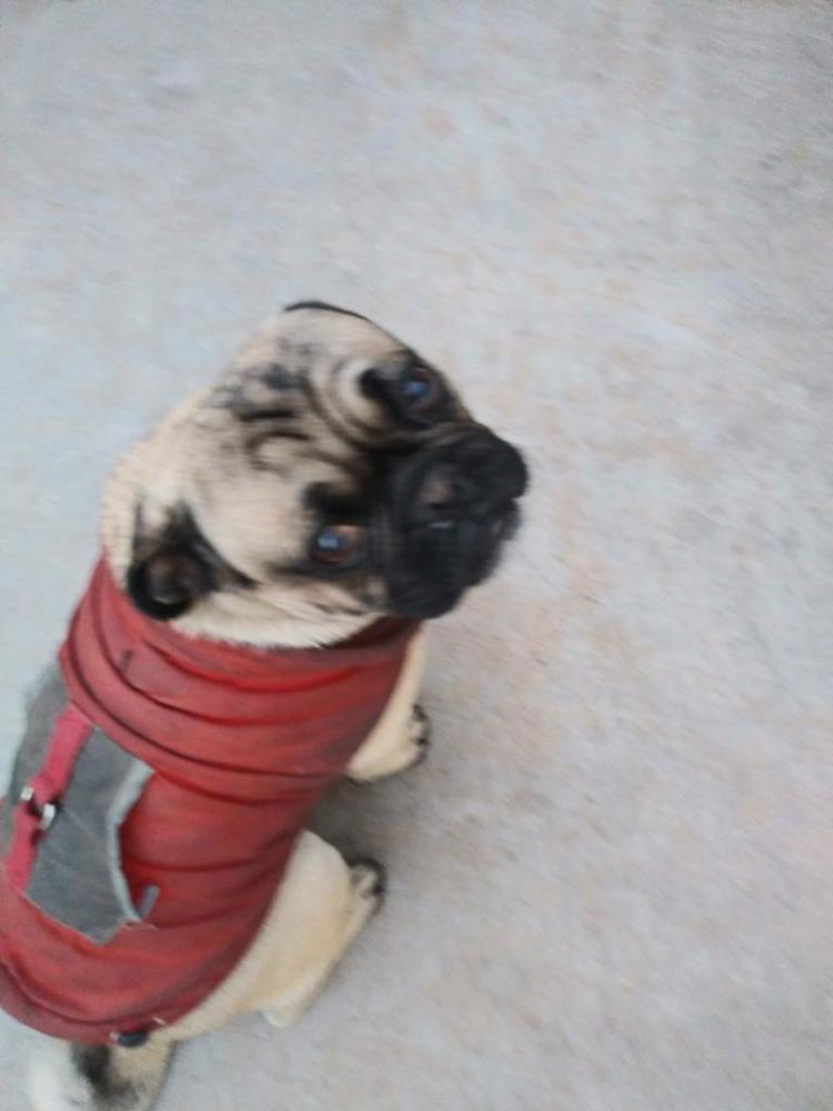 Lost Male Dog last seen Near E Moreland St & N 9th St, Phoenix, AZ 85006