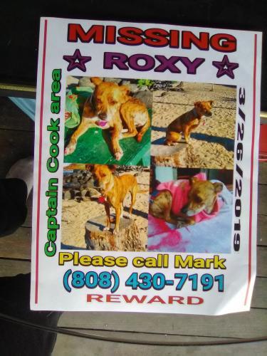 Lost Female Dog last seen Near Mamalahoa Hwy &Kona hospital Waenaoihana Loop, Kealakekua, HI 96750