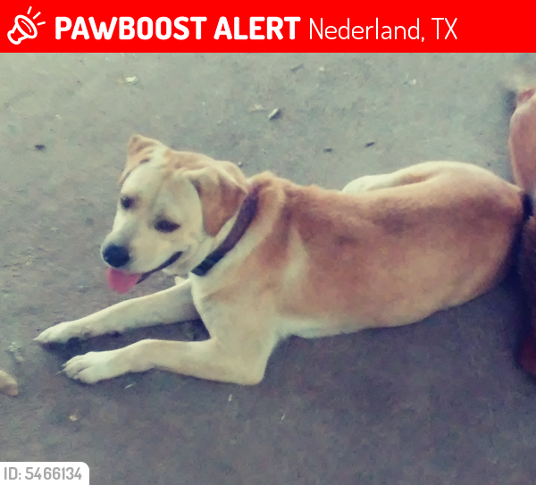 Lost Male Dog last seen Near Central Blvd & 5th Ave, Nederland, TX 77627
