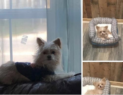 Lost Male Dog last seen 7th st and Griffing Park , Port Arthur, TX 77642