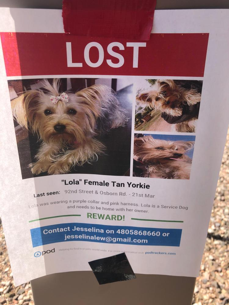 Lost Found Dogs Cats And Pets In Phoenix Az 85028 Page 3