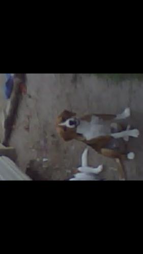 Lost Male Dog last seen Near Matterhorn Dr & Ridgewood Dr, Port Neches, TX 77651