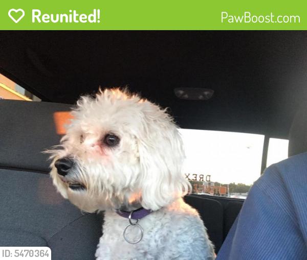 Reunited Female Dog last seen Near Kings Hwy, Woolwich Township, NJ, USA, Woolwich Township, NJ 08085