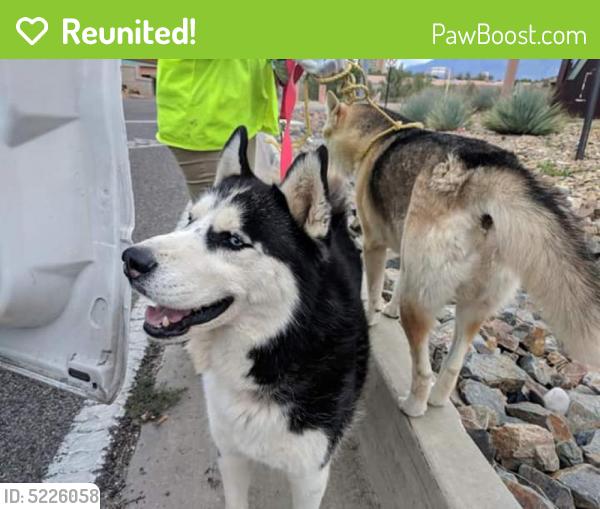 Reunited Dog in Albuquerque, NM 87104 (ID: 5226058)   PawBoost