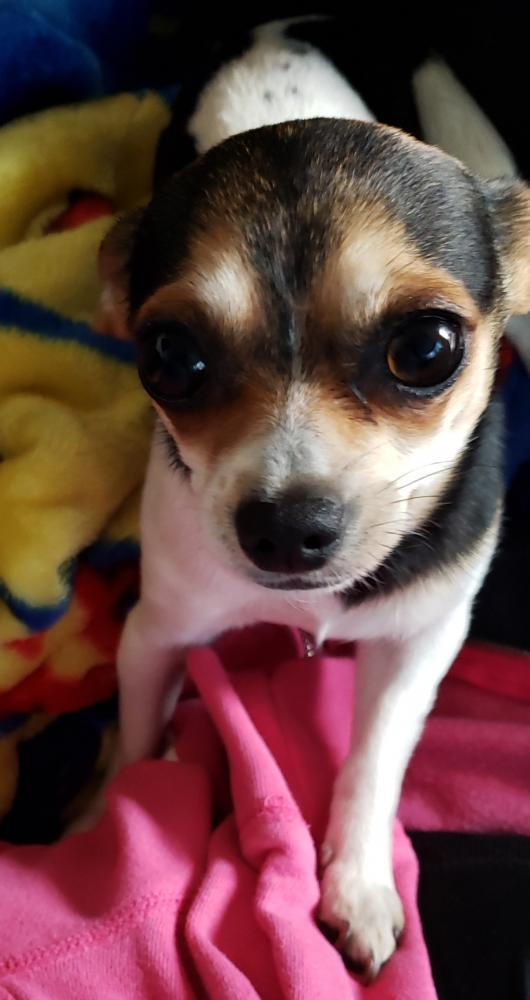 Lost & Found Dogs, Cats, and Pets in San Diego, CA 92021