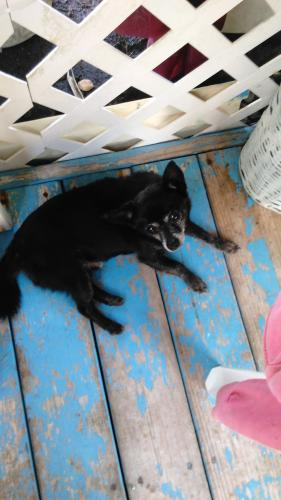 Found/Stray Male Dog last seen Near Kahakai Blvd & Maikoiko St, Hawaiian Beaches, HI 96778