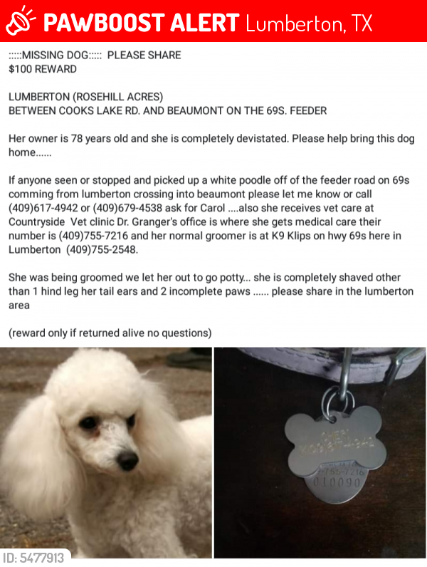 Lost Female Dog last seen Near Cooks Lake Rd. And 69 south frontage road, Lumberton, TX 77657