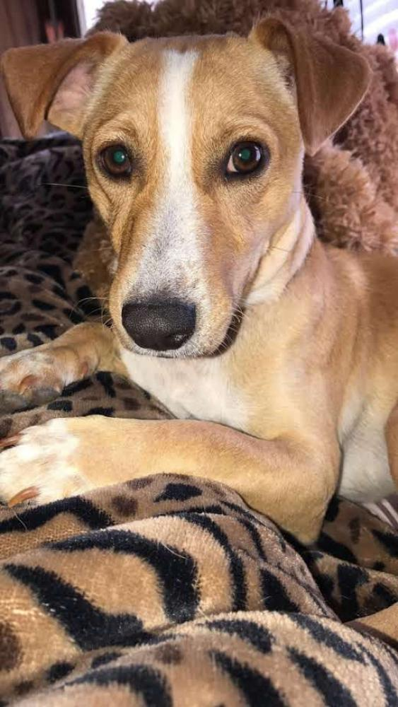 Lost Male Dog last seen Redbud Drive, New Caney, TX, USA, Montgomery County, TX 77357