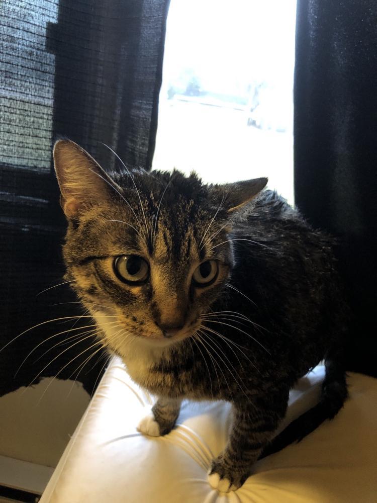 Lost Male Cat last seen Near S Ridgely Rd & W Watkin St, Kasota, MN 56050