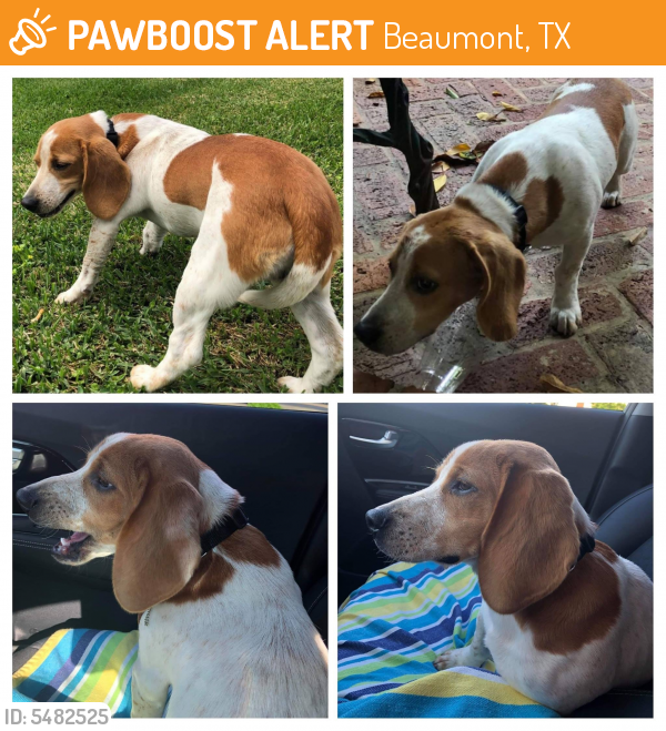 Rehomed Male Dog last seen I 10 &  Dr & Walden Rd, Beaumont, TX 77707
