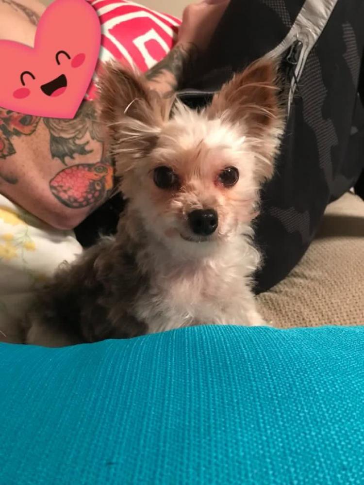 Lost Female Dog last seen Near Hathaway Dr & Fernedge Rd, Silver Spring, MD 20906