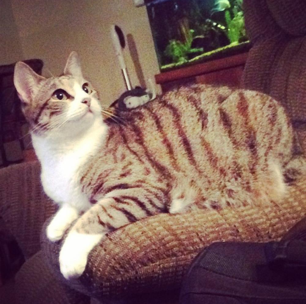 Lost Female Cat last seen Near Cattail Park Ct & Wild Oak Park Dr, Montgomery County, TX 77385
