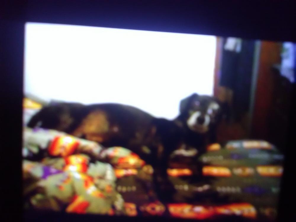 Lost Male Dog last seen Near S Lawson Dr & W Broadway Ave, Apache Junction, AZ 85120