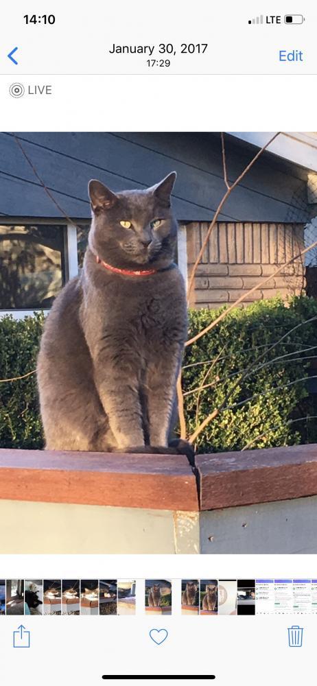 Lost Unknown Cat last seen Near Imperial Walk Ln & Wood Tower Ct, Spring, TX 77386