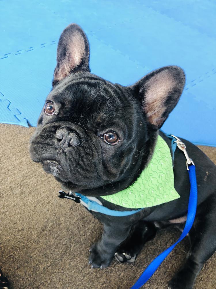 Lost Male Dog last seen Near Rosecrans Ave & Woodruff Ave, Bellflower, CA 90706