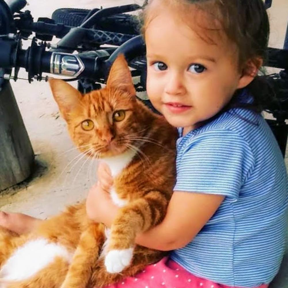 Lost Female Cat last seen Near Bessie Heights Road, Orange, TX, USA, Orange, TX 77630