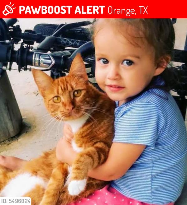 Lost Female Cat last seen Near Bessie Heights Road, Orange, TX, USA, Orange, TX 77630
