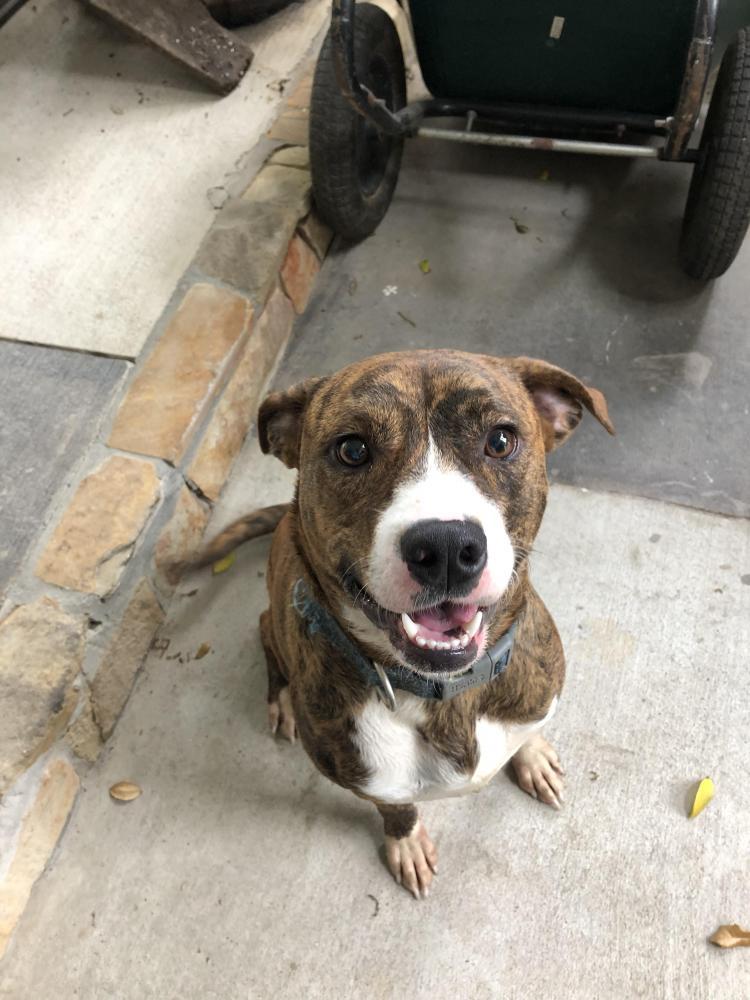 Found/Stray Male Dog last seen Near Bermuda Dunes & Paradise Valley Dr, Houston, TX 77069