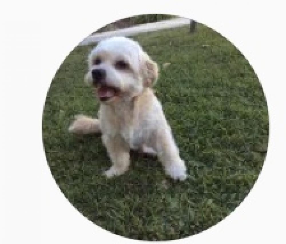 Lost Male Dog last seen Near Harbor Ave & W 19th street, Long Beach, CA 90813