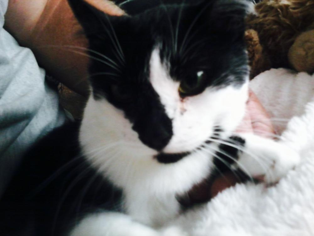 Lost Female Cat last seen Near Woodfield Rd & Woodfield school rd, Damascus, MD 20872