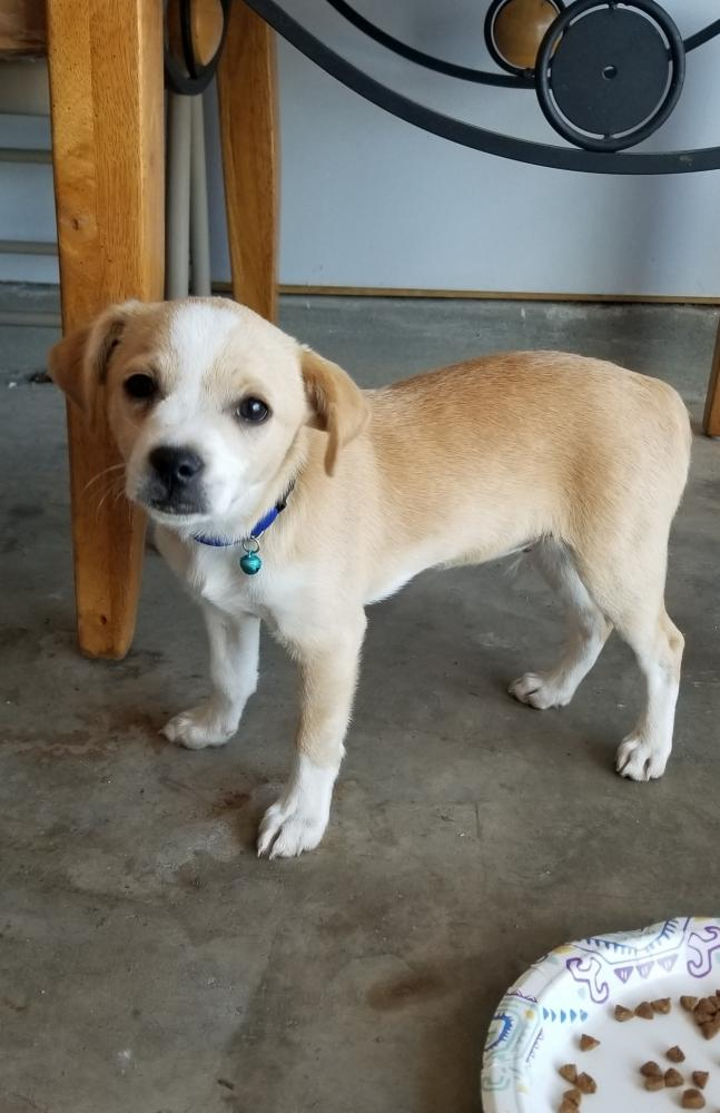 Found/Stray Male Dog last seen Near Rankin Rd & Ranch View Trl, Houston, TX 77060