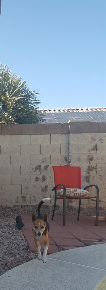 Found/Stray Male Dog last seen Near West Bruce Avenue and Neely, Gilbert, AZ 85233