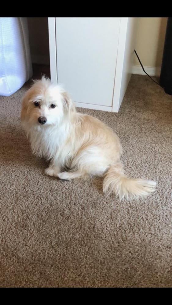 Lost Male Dog last seen Near N Civic Center Blvd & E 3rd Ave, Scottsdale, AZ 85251