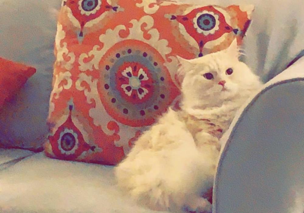 Lost Male Cat last seen Near Welbury Ct & Murray Downs Way, Reston, VA 20194