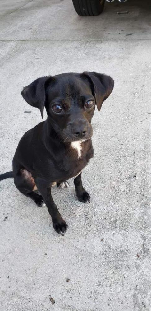 Found/Stray Male Dog last seen Near S Hill St & W 37th St, Los Angeles, CA 90007