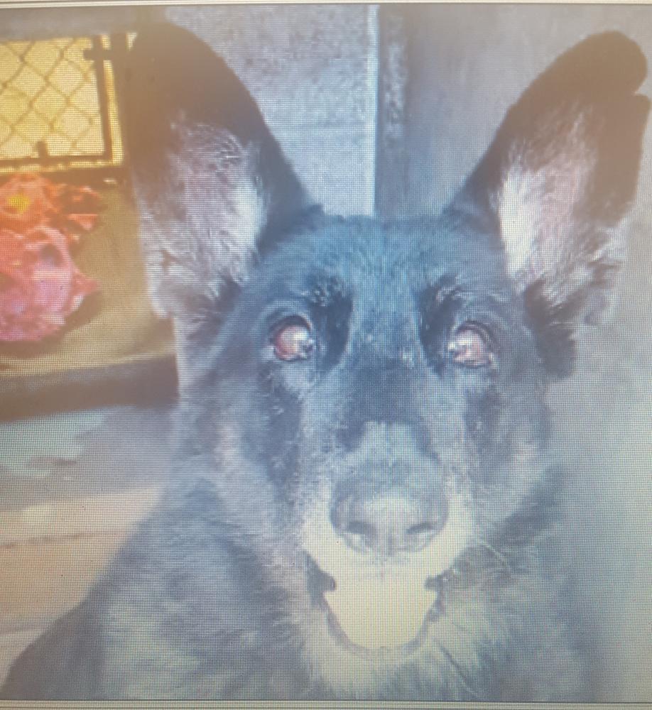 Found/Stray Female Dog last seen Near N Scottsdale Rd & hwy 101, Scottsdale, AZ 85251