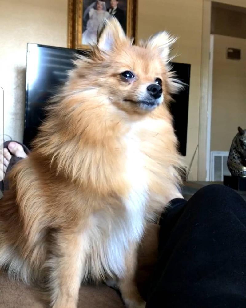 Lost Female Dog last seen Near W Krall St & N 43rd Ave, Phoenix, AZ 85019