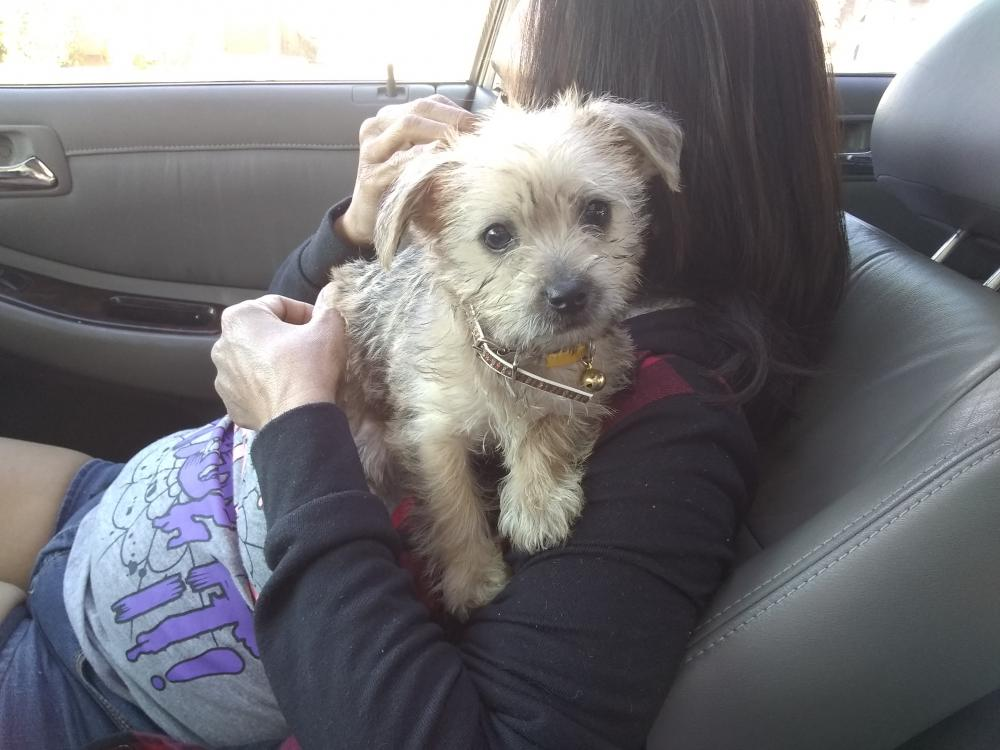 Lost Male Dog last seen Near E Libby St & N 19th St, Phoenix, AZ 85022
