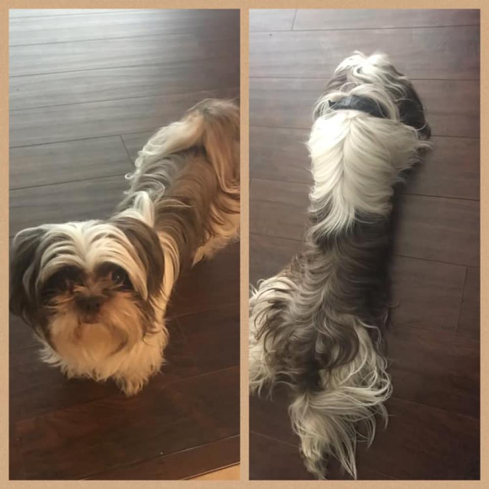 Lost & Found Dogs, Cats, and Pets in San Antonio, TX 78223