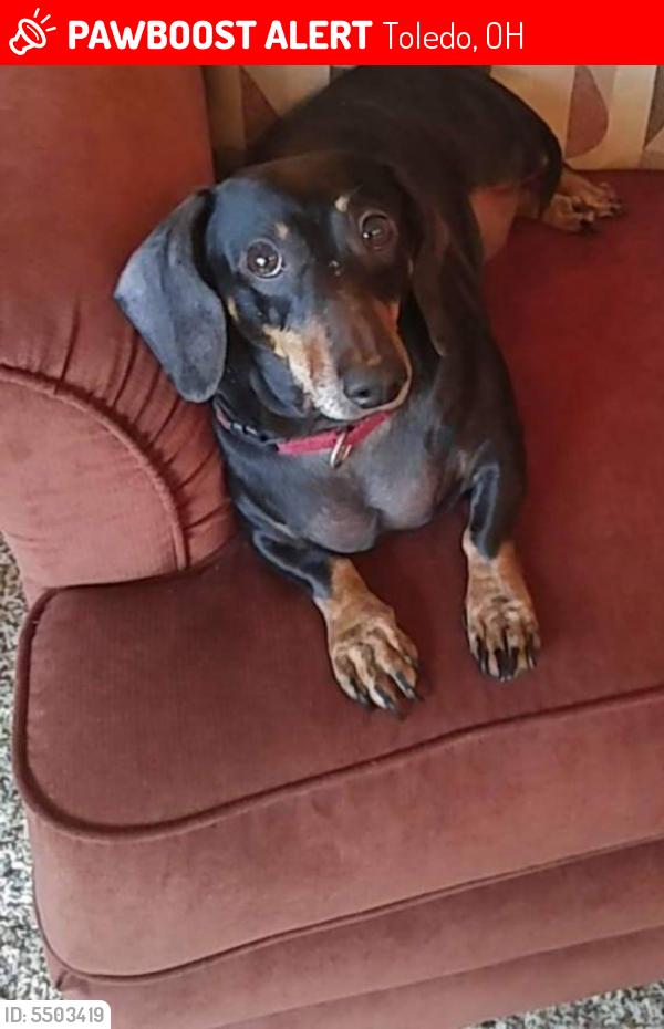 Lost Female Dog in Toledo, OH 43614 Named Helga (ID ...
