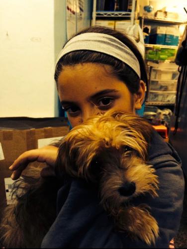 Lost Female Dog last seen Near Goodridge Ave & W 250th St, The Bronx, NY 10471