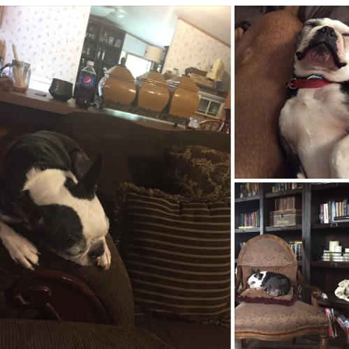 Lost & Found Dogs, Cats, and Pets in Sumner County, TN 37048