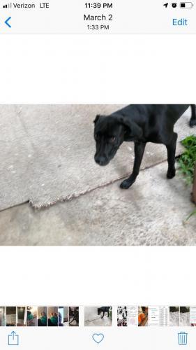 Lost Female Dog last seen Painted Church Road, Captain Cook, HI, USA, Honaunau-Napoopoo, HI 96704