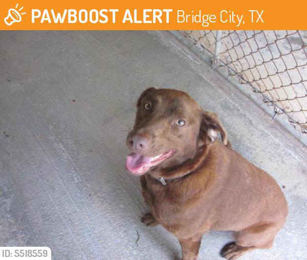 Found/Stray Female Dog last seen Hwy 73 and Hwy 62, Bridge City, TX 77611