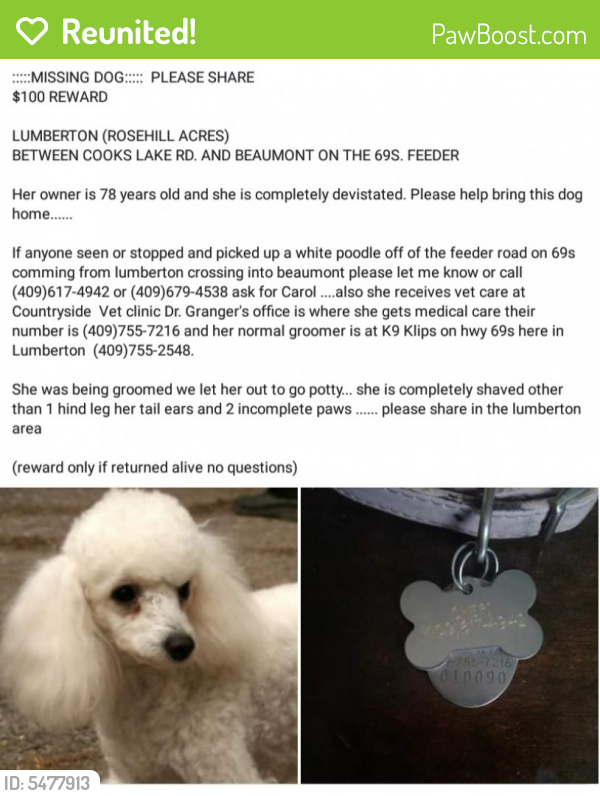 Reunited Female Dog last seen Near Cooks Lake Rd. And 69 south frontage road, Lumberton, TX 77657