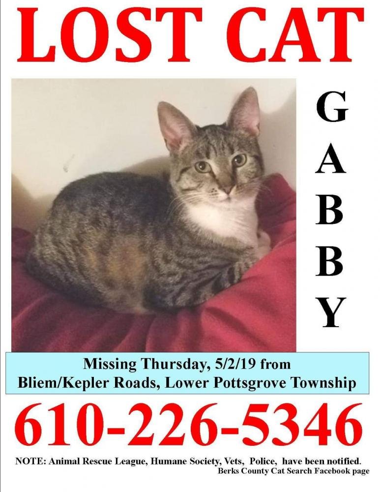 Lost & Found Dogs, Cats, and Pets in Northampton County, PA