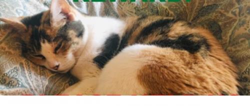 Lost Female Cat last seen Near La Mirada Ave & Los Robles Ave, San Marino, CA 91108