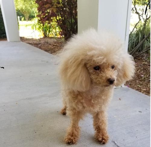 Lost Female Dog last seen Near Atkinson Circle, Orange, TX 77630, Orange, TX 77630