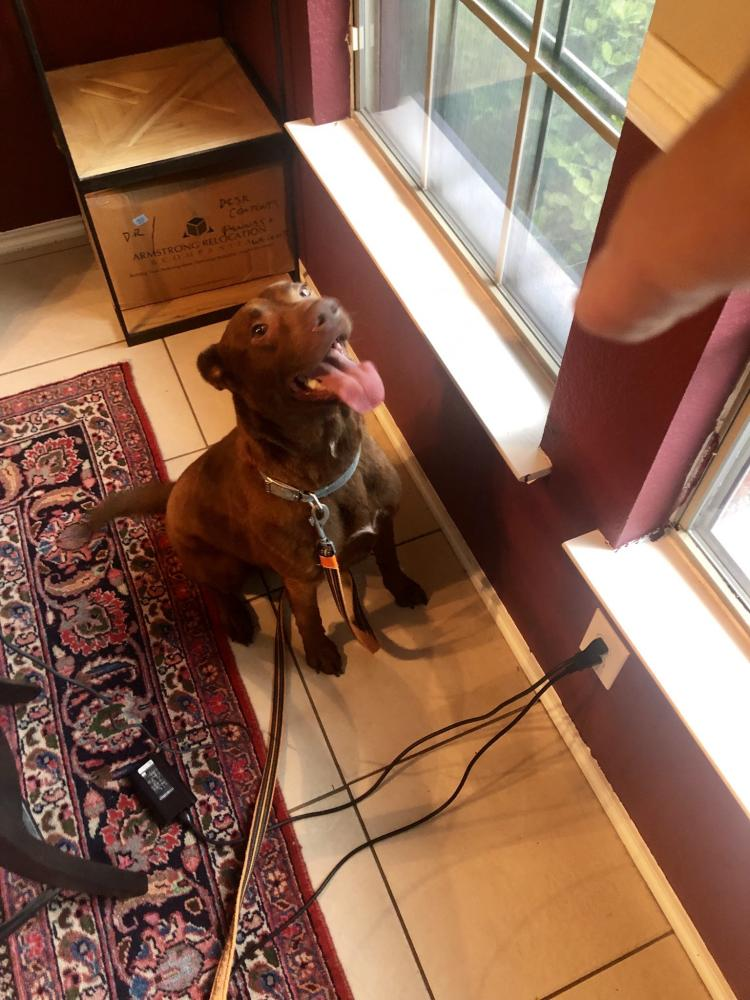 Lost & Found Dogs, Cats, and Pets in Amarillo, TX 79103 - Page 1