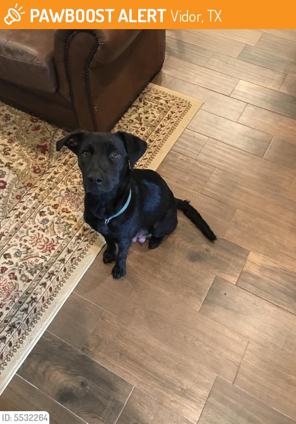 Found/Stray Female Dog last seen Near I- 10 & N Main St, Vidor, TX 77662