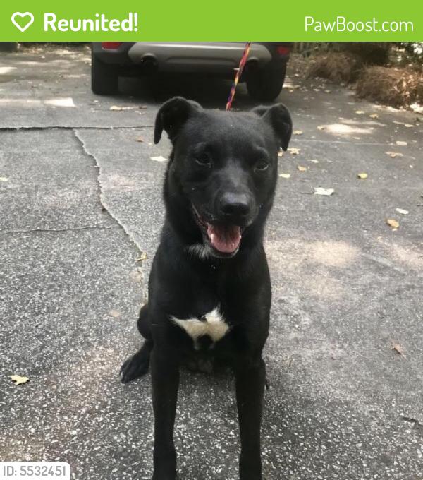 Boxer Puppies For Sale Craigslist Nc - petfinder