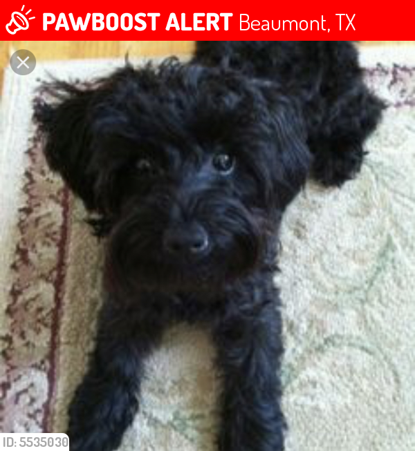 Lost Female Dog last seen Near 19th St & Brentwood Dr, Beaumont, TX 77706