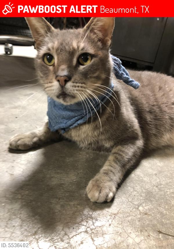 Lost Male Cat last seen Around Mark's Machine Shop , Beaumont, TX 77701