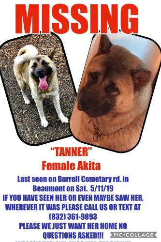Lost Female Dog last seen Near Cemetery Rd & Benoit, Jefferson County, TX 77713