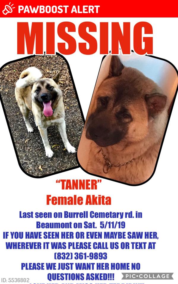 Lost Female Dog last seen Near Cemetery Rd & Benoit, Jefferson County, TX 77713